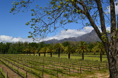Winelands, Südafrika-Rundreise