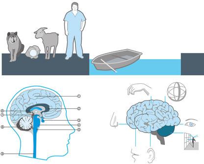 Pimp your Brain, Illustrationen für Gehirntraining