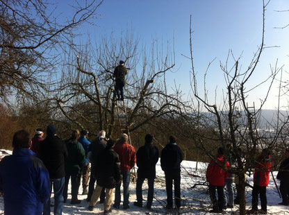 Winterschnittkurs für Obstbäume im Rems-Murr-Kreis