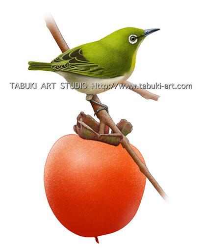 メジロ 目白 野鳥 イラスト 切り抜き カレンダー
