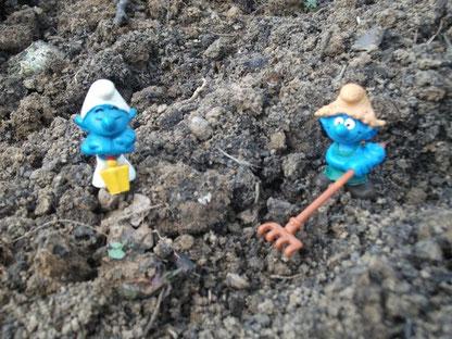 Les schtroumpfs au potager