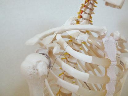 石灰沈着性腱板炎(肩関節石灰沈着症)の原因はリン酸カルシウムの沈着