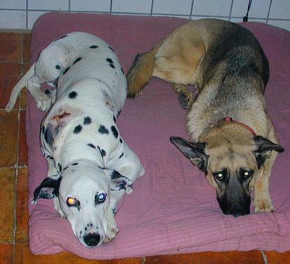Max  der Dalmatiner  und Elsa bewegten sich fast immer gleich