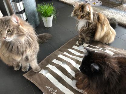 Katzen Beschäftigungs-Spiel von Trixie