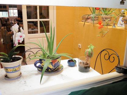 Gemütlicher Balkon mit Pflanzen und Gartenmöbel, im Vordergrund vom Bild sieht man eine Orchidee