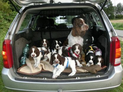 Autofahren will gelernt sein - die M&Ms lernen viel kennen!