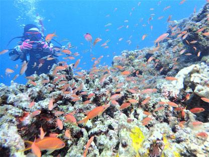 石垣島でのんびりダイビング「大崎ハナゴイリーフ」ヒートハートクラブ