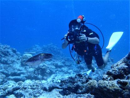石垣島でのんびりダイビング「コブシメのちびちゃん」ヒートハートクラブ