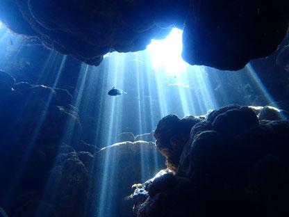 石垣島でのんびりダイビング「光の森」ヒートハートクラブ