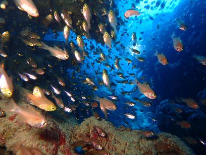 石垣島でのんびりダイビング「お魚のトンネル」ヒートハートクラブ