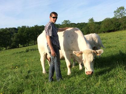 Prairie , vache , chaloraise , veau , Ferme du Tuilet , Nicolas Pinel