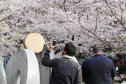 花見をする外国人_SLP