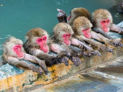温泉と猿001_SLP