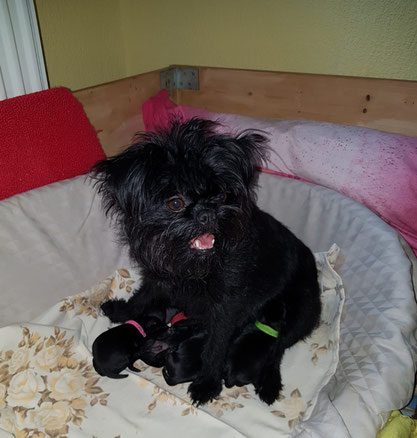 Alle sind wohlauf und  Karla ist eine sehr fürsorgliche und liebevolle Hundemama.
