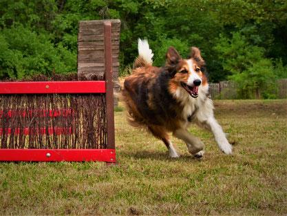 Hund - Spiel