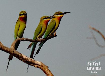 Birding, Birdwatching, Birdingweek, Birdingtour, Ornithologie, Knuckles, Sri Lanka, Birds, Trekking, Walks, Hiking, Kandy, Wildlife, Explorer, Adventure, Nature, Photography