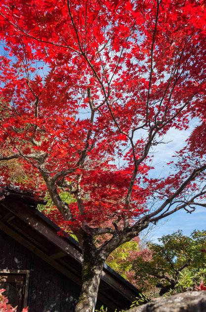 京都亀岡・神蔵寺の紅葉