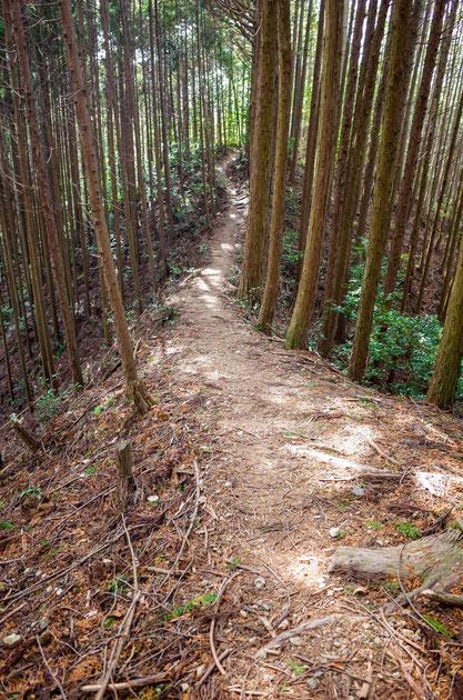 【京都トレイル北山西部コース】