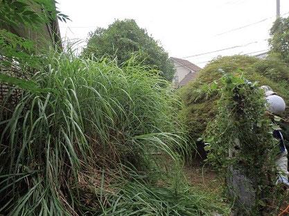 庭の手入れ 草刈り