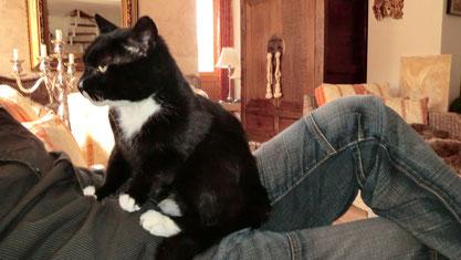 Tierbetreuung vor Ort, Agentur Lorenz Noll - Katzenbetreuung, Katzensitter