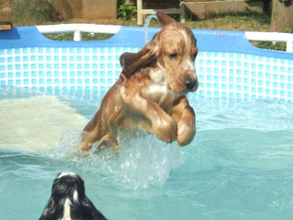 vedi che tuffi nella nostra piscinetta !