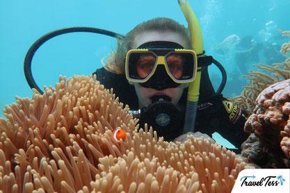Clownvis duiken Great Barrier Reef