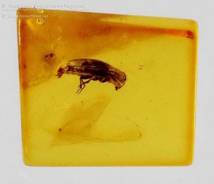 Инклюзы в янтаре:   Coleoptera, Melandryidae