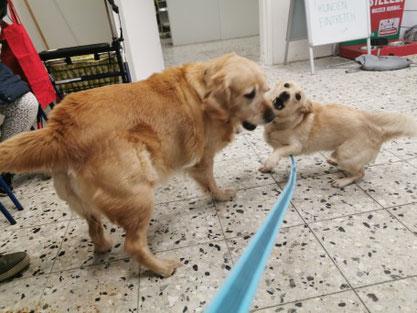 Lilli und Eddy, Foto: Eddys Frauchen