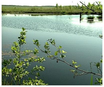 Naturpark Südheide  Heide - Moorlandschaft