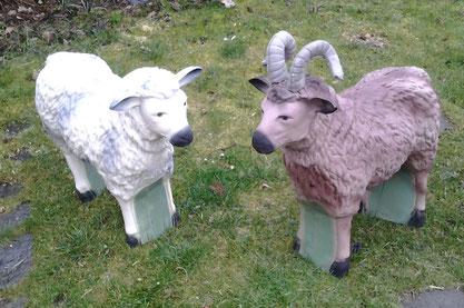 Unsere neuer Schafbock und unser Schaf sind da.