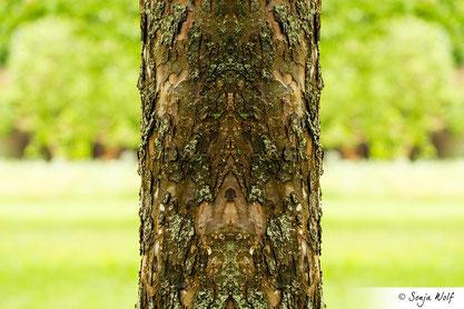 Baumstamm - Symmetrie