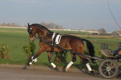 Lubbert en Simone: over het trainen van paarden en nog veel meer