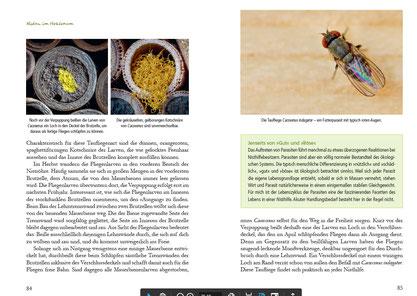 pala-Verlag Fertig zum Einzug: Nisthilfen für Wildbienen.  Leitfaden für Bau und Praxis – so gelingt's! Werner David Insektenhotel Cacoxenus indagator