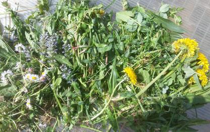 Bunte Mischung aus Wiesenblumen und Kräutern - das ideale Schildkrötenfutter