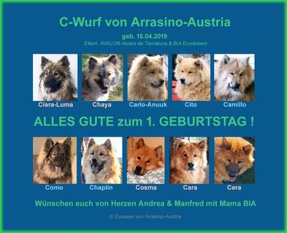 C-Wurf von Arrasino-Austria, geb. 15.04.2019