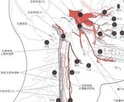中央部の上頚神経節があります。
