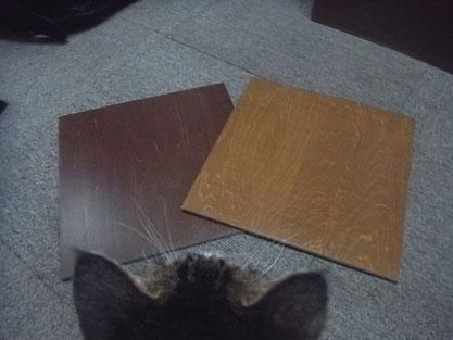 木部塗装サンプルと(有)岩津塗装の飼い猫ララ。