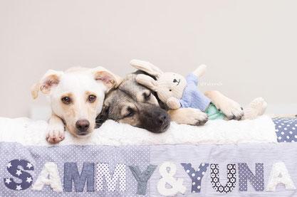 Geschenk Hundebesitzer, Hundedecke