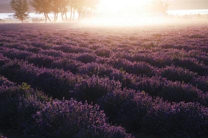 Stress Away, Lavendel, Release, Zedernholz und Sandelholz für guten Schlaf