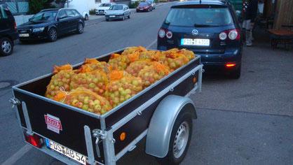 Die Apfelernte wartet vor der Mosterei