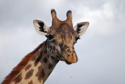 Arusha Nationalpark Tagesausflug