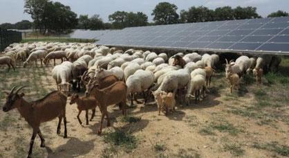 location de terrain panneau photovoltaïque
