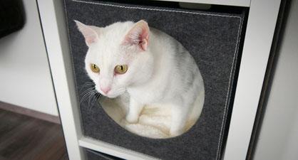 Katze sitzt in Katzenhöhle