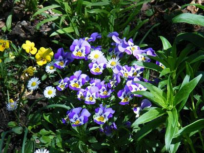 Springtime in Werfenweng