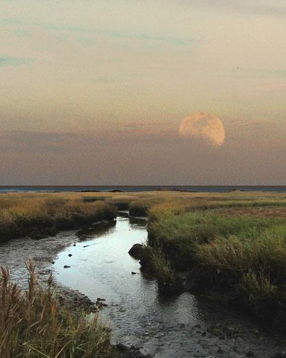 moon marsh