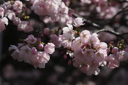 季節の風 2019年4月「春らんまん」
