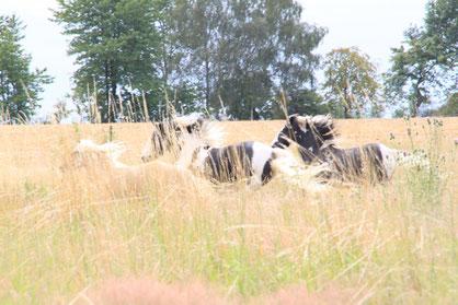 So auf der Weide gehalten, in  fester, harmonischer Gruppe rechnet man eher nicht mit Magengeschwüren - aber auch da darf man sich nicht zu sicher sein!