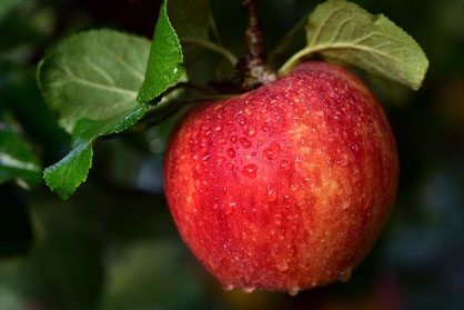 Apfel Fasten Federleicht Genuss