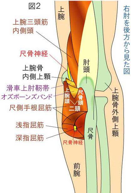 肘部管症候群とギヨン管症候群 -...