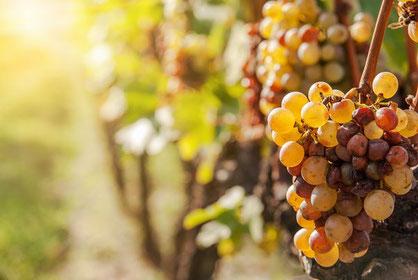 Domaine de Joreau propose des séjours de découvertes des Vins de Loire